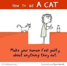 """""""Cerca di fare sentire in colpa i tuoi umani per qualsiasi cosa mangino""""."""