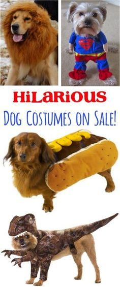 Hilarious Dog Costumes on Sale!  Show off your dog in a ridiculously adorable costume! #costumes #pets | TheFrugalGirls.com