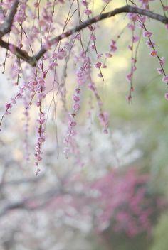 Spring Colors   Kaz Watanabe