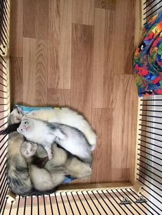 「どうしてもブランケットの上がいい!」ぎっしり重なって眠るフェレットが可愛すぎる - IRORIO(イロリオ)