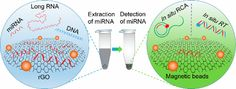 Reduced Graphene Oxide-Based Solid-Phase Extraction for the Enrichment and Detection of microRNA