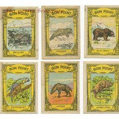 Lot de six bons points Blédine Jacquemaire série les animaux Objets Antiques, Bon Point, Baseball Cards, Vintage, Heaven, Art, Seals, Little Pigs, Childhood