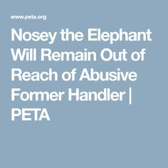 Nosey the Elephant Will Remain Out of Reach of Abusive Former Handler | PETA