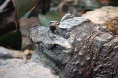 https://flic.kr/p/qwY1sr | Bristol Zoo | September 2013