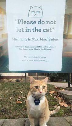 Crazy cats, i love cats, crazy cat lady, hilarious animal memes, funny Memes Humor, Funny Animal Memes, Funny Animal Pictures, Cute Funny Animals, Cute Baby Animals, Funny Cute, Cute Cats, Funny Memes, Funny Pics