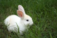Google Image Result for http://2.bp.blogspot.com/_kmftOw1NnWk/S7MUdfej7eI/AAAAAAAAABY/rtxKYZnCdps/s1600-R/white_bunny.jpg