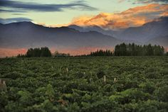 Mendoza -- the largest wine region in Argentina. Domaine Bousquet, Patagonia, Chile Tours, Mountain Bike Tour, Iguazu Falls, Sailing Trips, Relaxing Places, Shore Excursions, American Country