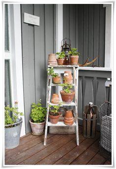 Växtstege! En gammal stege med pelargoner blir fint på farstubron.