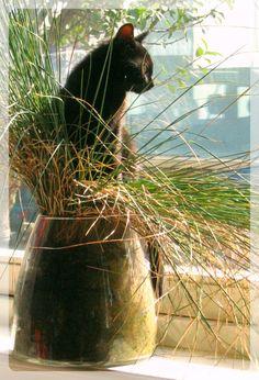 Mika / Zwarte Kat / Black Cat