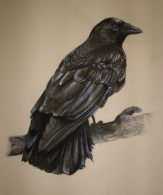 Carrion Crow by ~Kastanada on deviantART