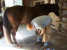 Teaching your horse to be good for the Ferrier. #horsetraining #pickupyouhoof