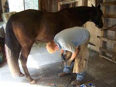 Teaching your horse to be good for the Ferrier. #horsetraining #pickupyouhoof