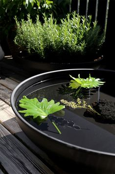 Tips! Bålpanner er populært og kan brukes til mangt. Som varmekilde, vannspeil, vinkjøler og plantekar for eksempel. Det er bare å plugge igjen hullet i bunnen når den skal holde på vann. Garden Design, Herbs, Plants, Gardening, Porches, Lawn And Garden, Herb, Landscape Designs, Plant