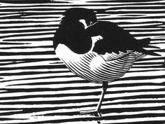 Oystercatcher by Chris Rose, linocut Black Pen Sketches, Linocut Artists, Woodcut Art, Nz Art, Linoprint, Bird Artwork, Rustic Art, Wildlife Art, Woodblock Print