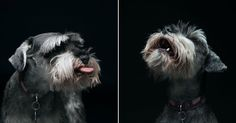Expressive Photos Of Dogs - Business Insider
