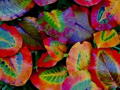 Brightly colored leaves.