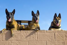 U.S. Air Force military working dogs Roc, Kisma and Jampy