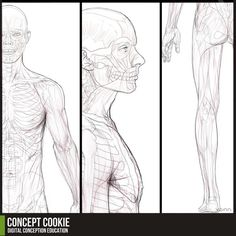Anatomy Resource: Full Male Body by CGCookie on DeviantArt