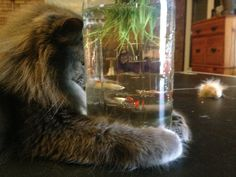 When you think you can talk to fish. | 21 Times Cats Were You IRL