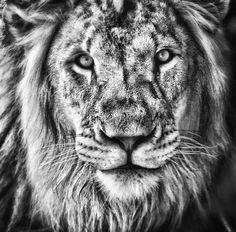 The King's Portrait by Jeff Clow, via 500px