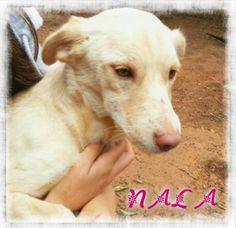 Nala es una #cachorrita abandonada que por fin ha encontrado un hogar. ¡Estamos felices! :)