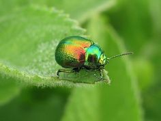 The leafy environment of some beetles is often illuminated by intermittent flashes of sunlight as breezes move through the trees. The glistening surfaces of ...
