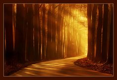 The above shot was taken at the Veluwezoom, when the morning sun set the still bare reddish brown beeches on fire.