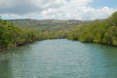 Parque Nacional de Monte Cristi, tiene el segundo bosque de manglares más grande (92km2) del  país, lo que equivale al 40 % de los manglares a nivel nacional.