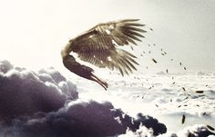 Icarus                                                                                                                                                                                 More