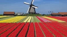 Spring Time in the Netherlands. Take me here!