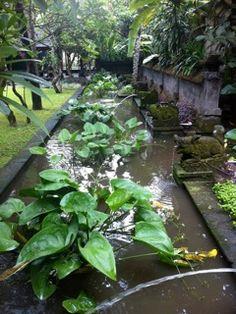 Segara Village Hotel Sanur Bali - everywhere you walk beautiful gardens & statues ...
