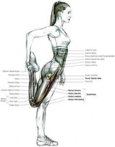"""Alongamento quadríceps O músculo quadríceps do fémur, que em latim significa """"quatro cabeças"""", é um grande grupo muscular da frente da coxa e é o principal"""