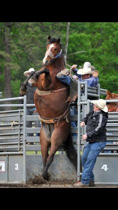 Things Horses Do.sometimes they warn you to get off before things get crazy! (from Cindy Wilber) Cowboy Horse, Cowboy And Cowgirl, Horse Riding, Cowgirl Pictures, Horse Pictures, Cowboy Pics, Cowboy Quotes, Rodeo Cowboys, Real Cowboys