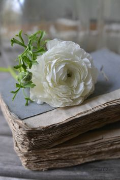 ranunculus and old books Old Books, Antique Books, Vintage Books, Book Flowers, Garden Fountains, Ranunculus, Book Photography, Cute Wallpapers, Flower Art