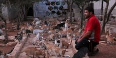 An ambulance driver in Aleppo began feeding abandoned cats several years ago and now has a sanctuary. He needs our support! (25076 signatures on petition)