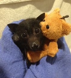 Nothing you can say will convince me that bats are ugly. Look at that face!!!