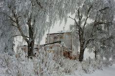 Заснеженная Русь…  Деревня Погост, Холмогорский р-он, Архангельская область.