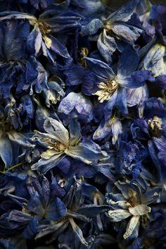 flower, blue,