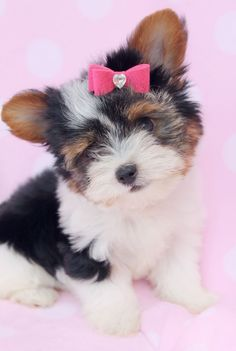 Do you like this Yorkies pink bow?