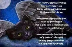 Cat prayer