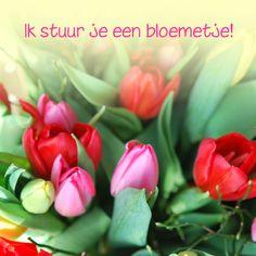 Fotokaart tulpen kleurrijk, verkrijgbaar bij #kaartje2go