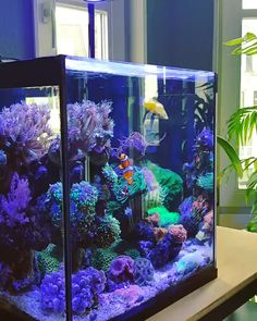 How to Create and Care for a Coral Aquarium Many aquarium owners crave to someday own a saltwater tank displaying numerous kinds of coral. Coral Aquarium, Saltwater Aquarium Fish, Tropical Fish Aquarium, Freshwater Aquarium Fish, Saltwater Tank, Marine Aquarium, Spongebob Fish Tank, Marine Fish Tanks, Marine Tank
