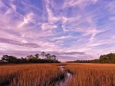 Another magical scene on Hunting Island, South Carolina, near Beaufort South Carolina. This is truly a magical, delightful area of pristine marsh land where the shrimp and crabs are everywhere.
