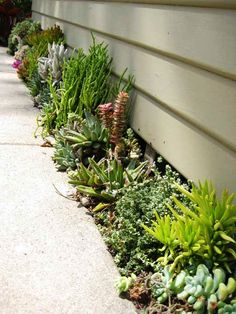 Small Space Succulent Garden. Perfect next to JDs house in small flower bed