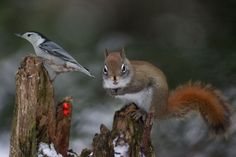 Sitelle et squirrel by Andre Villeneuve - Photo 132520103 - 500px