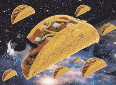 Taco kitty. Qu'est-ce que c'est? Bah ba-bah BAH ba-bah ba-bah BAH BUH.