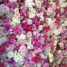 Gorgeous fresh flower wall #ktportofino #Padgram