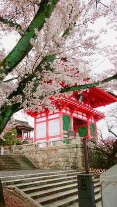 Kiyomizu Temple, Kyoto, Cabin, Cherry Blossoms, House Styles, Wallpaper, Nature, Backgrounds, Beautiful