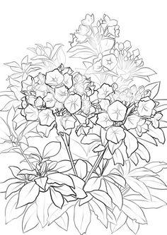 Geranio Disegno da colorare | fiori | Pinterest | Disegno ...
