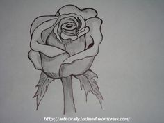 ROSE FLOWER - Sketching by Sushmitha TD in My Projects at touchtalent